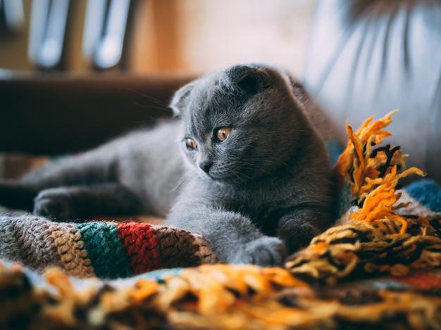คอนโดเลี้ยงแมวได้